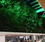 グリーンライトアップ垂直の庭.jpgのサムネイル画像のサムネイル画像のサムネイル画像